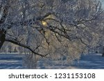 winter tree with snow and... | Shutterstock . vector #1231153108