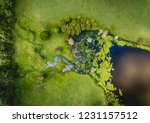 abstract waterways in luscious... | Shutterstock . vector #1231157512