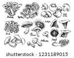 mushrooms. white button  morel  ... | Shutterstock .eps vector #1231189015