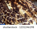 the owl's wing texture that has ... | Shutterstock . vector #1231246198