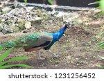 mexico  yucatan peninsula  ... | Shutterstock . vector #1231256452