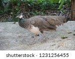 mexico  yucatan peninsula  ... | Shutterstock . vector #1231256455
