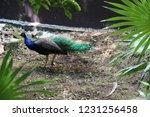 mexico  yucatan peninsula  ... | Shutterstock . vector #1231256458