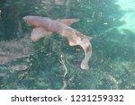 mexico  yucatan peninsula  ... | Shutterstock . vector #1231259332