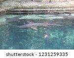 mexico  yucatan peninsula  ... | Shutterstock . vector #1231259335