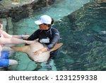 mexico  yucatan peninsula  ... | Shutterstock . vector #1231259338