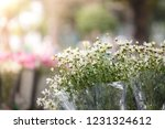 nightingale daisy flower in... | Shutterstock . vector #1231324612