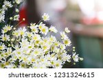 nightingale daisy flower in... | Shutterstock . vector #1231324615