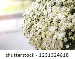 nightingale daisy flower in... | Shutterstock . vector #1231324618