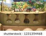 mexico  yucatan peninsula  ... | Shutterstock . vector #1231354468