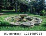 abandoned overgrown round... | Shutterstock . vector #1231489315