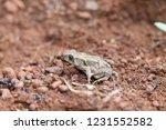 frog | Shutterstock . vector #1231552582