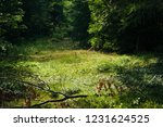 through the schwarzwald | Shutterstock . vector #1231624525