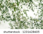 the green bush is covered with... | Shutterstock . vector #1231628605