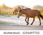 a wild pony  equus caballus ... | Shutterstock . vector #1231697722