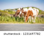 a group of wild pinto ponies ... | Shutterstock . vector #1231697782