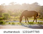 a wild pony  equus caballus ... | Shutterstock . vector #1231697785