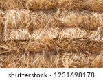 pattern background with pile of ...   Shutterstock . vector #1231698178