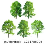 tree set collection isolated on ... | Shutterstock . vector #1231705705