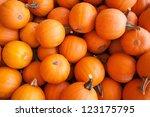 Pumpkins In Pumpkin Patch...