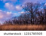 Bare trees and grasses in New Glarus Woods State Park