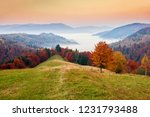 fantastic autumn dawn scenery... | Shutterstock . vector #1231793488