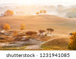 autumn grazing scenery on... | Shutterstock . vector #1231941085