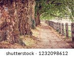 alley of sycamore trees and...   Shutterstock . vector #1232098612