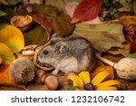 little pet hamster   phodopus... | Shutterstock . vector #1232106742
