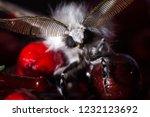 Leucoma Salicis  White Moth...