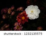 white and red flowers in the... | Shutterstock . vector #1232135575