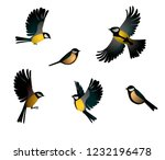 set of titmouse isolated  vector | Shutterstock .eps vector #1232196478