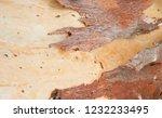 wooden texture as background | Shutterstock . vector #1232233495