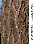 birch bark  b tula a genus of... | Shutterstock . vector #1232252908