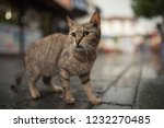 tabby stray cat in pedestrain... | Shutterstock . vector #1232270485