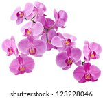 Orchid Flowers  Isolated On...