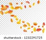 oak  maple  wild ash rowan... | Shutterstock .eps vector #1232291725