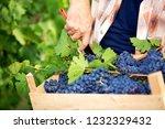 grape in basket | Shutterstock . vector #1232329432