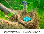 Blue Robins Eggs In A Nest On A ...