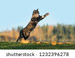 Stock photo funny cat playing in autumn 1232396278
