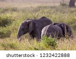 elephants fighting on the... | Shutterstock . vector #1232422888