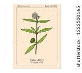 false daisy  eclipta prostrata  ... | Shutterstock .eps vector #1232500165