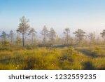 foggy morning at yelnya swamp ... | Shutterstock . vector #1232559235