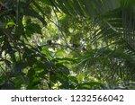 monkeys are having fun in the... | Shutterstock . vector #1232566042