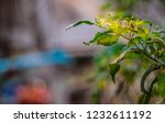 nature created with light... | Shutterstock . vector #1232611192