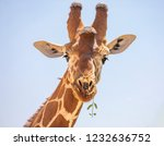 close up portrait of head and... | Shutterstock . vector #1232636752