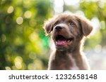portrait of happy adorable... | Shutterstock . vector #1232658148