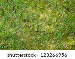 Ground With Grass And Moss
