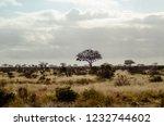 solitary tree landscape in...   Shutterstock . vector #1232744602