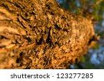 tree bark in beams of the... | Shutterstock . vector #123277285